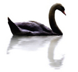 Black-Swan-A-Lane-Long-Way-From-Home