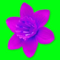 Paedophil Daffodil